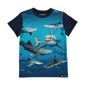 Molo T-shirt Raymont Shark Smile