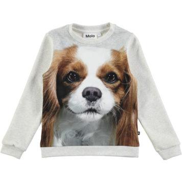 Molo sweater Mara Spanial