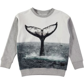 Molo sweater Morell Whale Tail